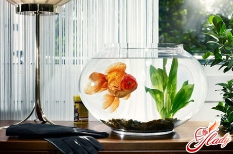 в зону богаства можно поставить аквариум с золотыми рыбками