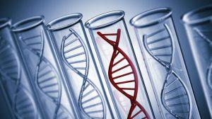 Что показывает тест ДНК