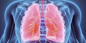 Анатомия дыхания