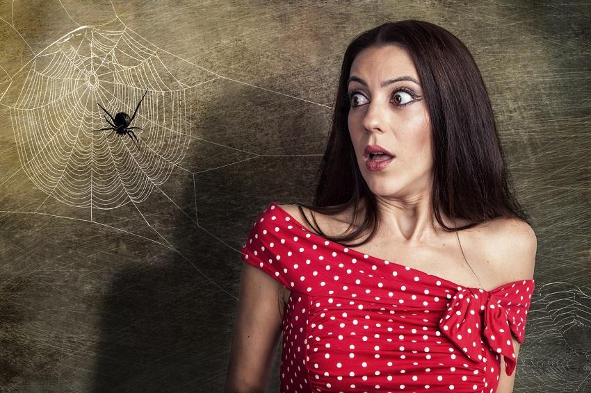 Почему убить паука в доме - плохая примета