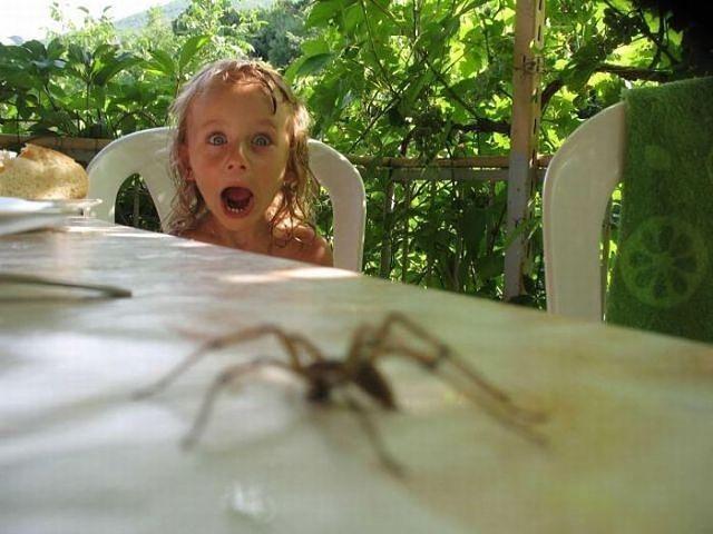 Увидеть паука в доме: хорошая примета или плохая
