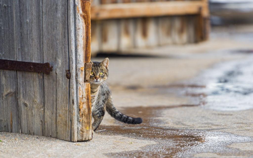 Чужая кошка пришла в дом: что означает эта примета для домочадцев