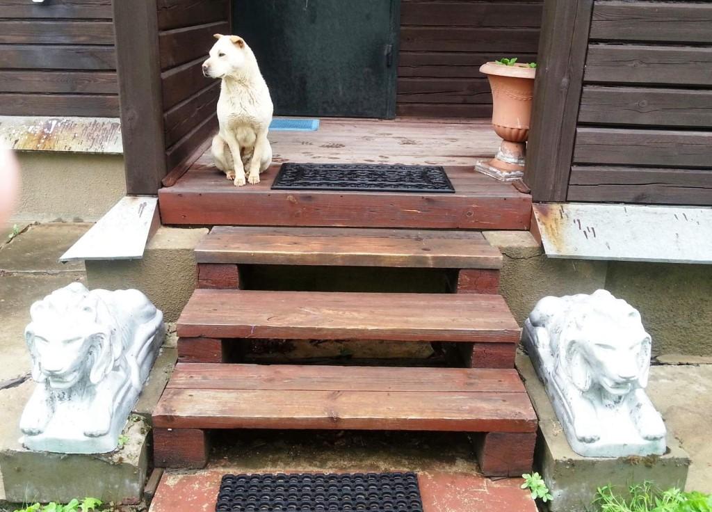 Что сулит хозяевам чужая собака, прибившаяся к дому
