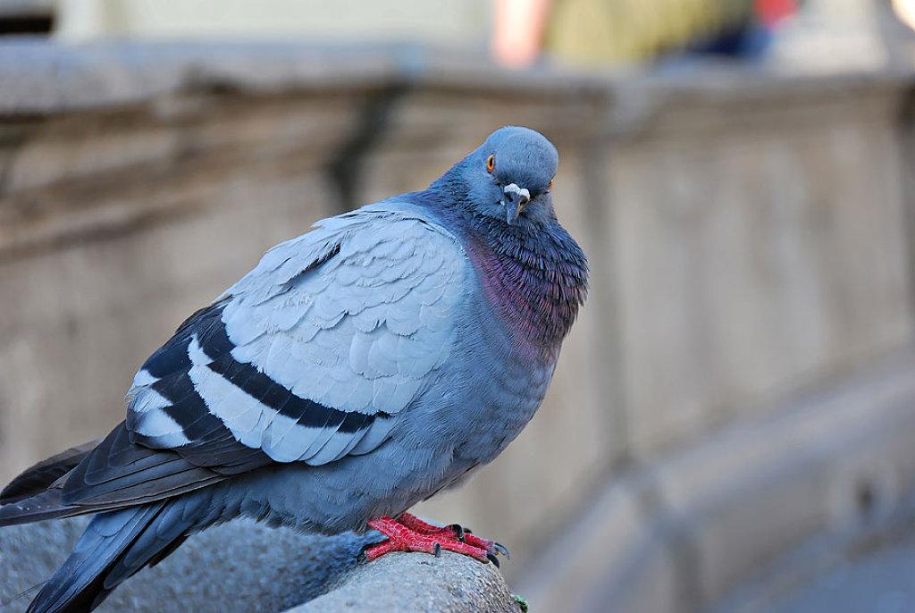 К чему птица метит человека, окно или машину