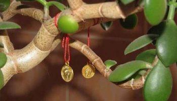 Денежное дерево фен шуй – талисман богатства и удачи