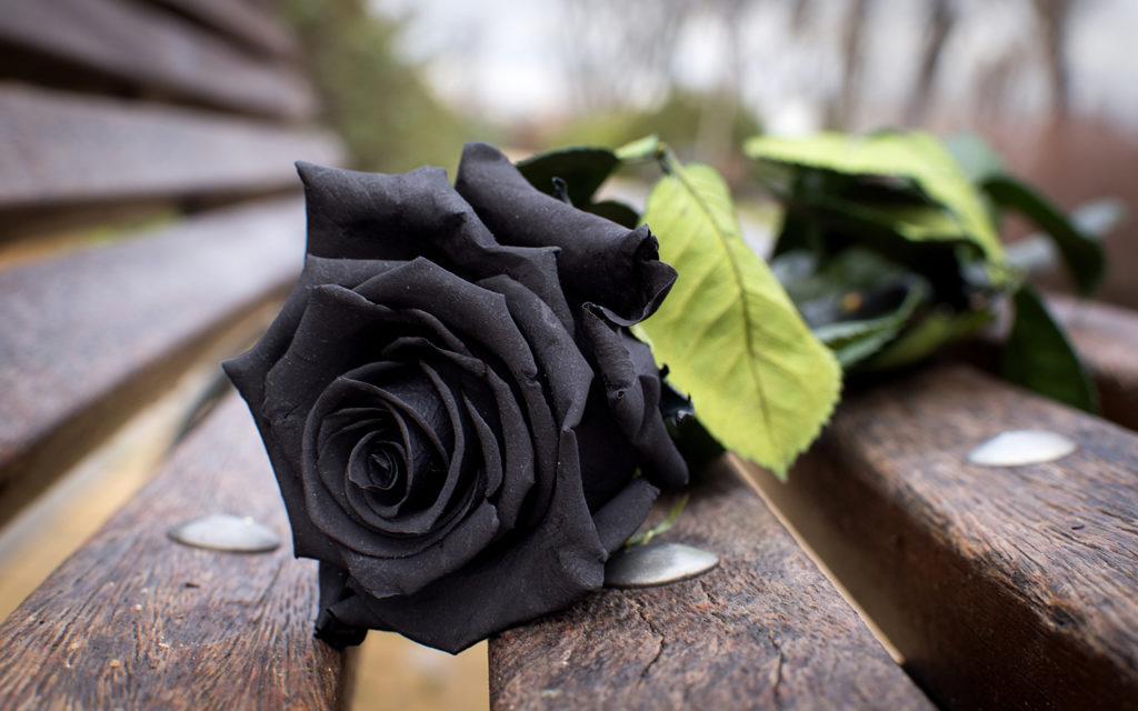 К чему дарят черные розы: плохая примета или хорошая