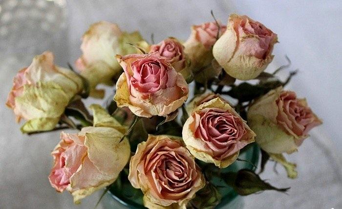 Стоит ли держать в доме сухие цветы, и куда поставить вазу, чтобы букет принес удачу