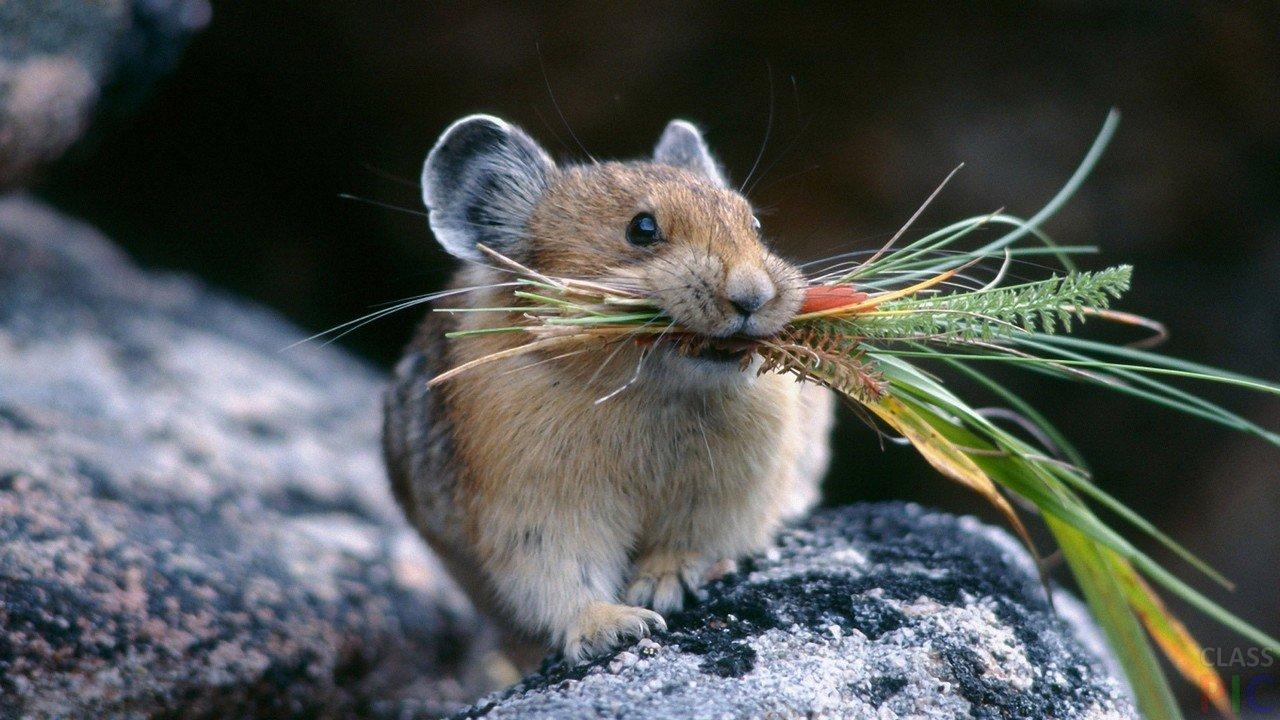 Что предвещают приметы, если в доме появились мыши