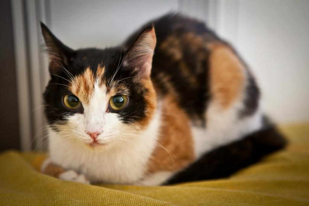 Говорят, счастливая: народные приметы о трехцветной кошке в доме