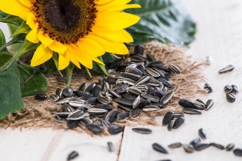 Почему нельзя грызть семечки после похорон и другие приметы