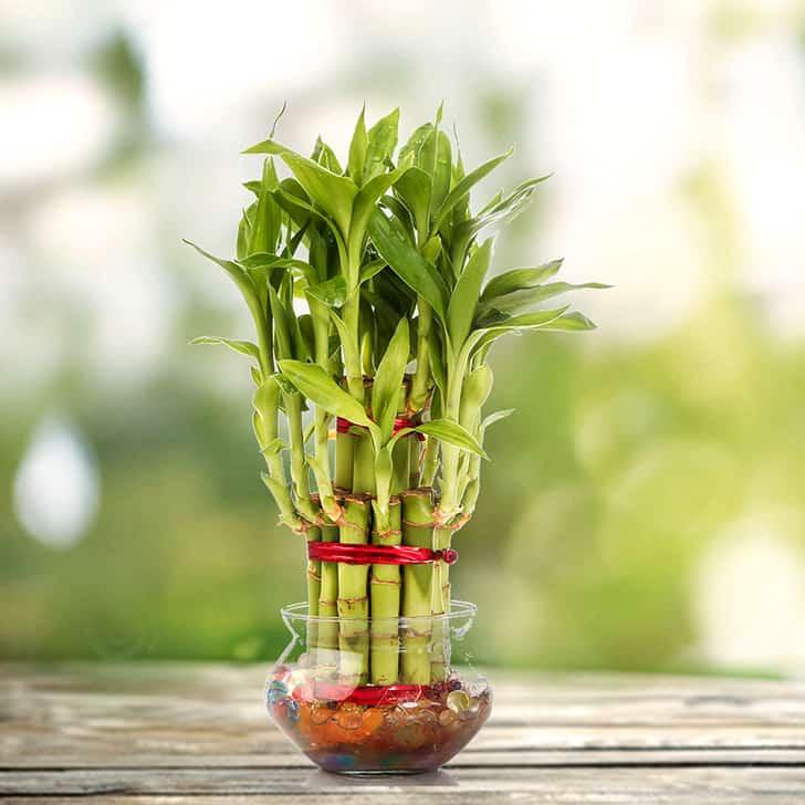 Эти 3 растения привлекут удачу и гармонию в ваш дом