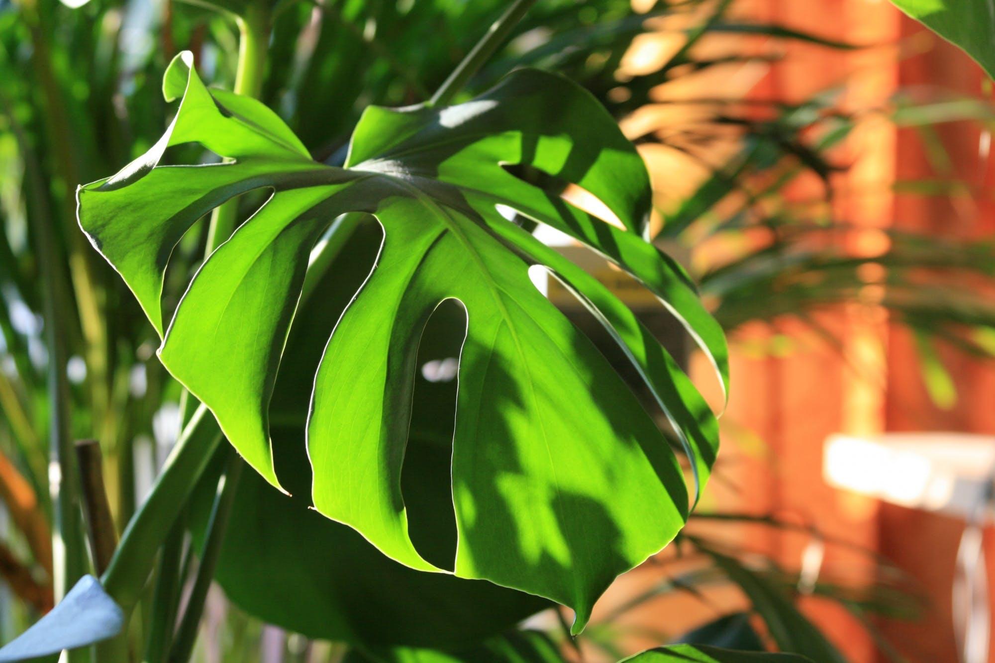 """3 растения-вампира, которые """"высосут"""" положительные эмоции из вашего дома"""