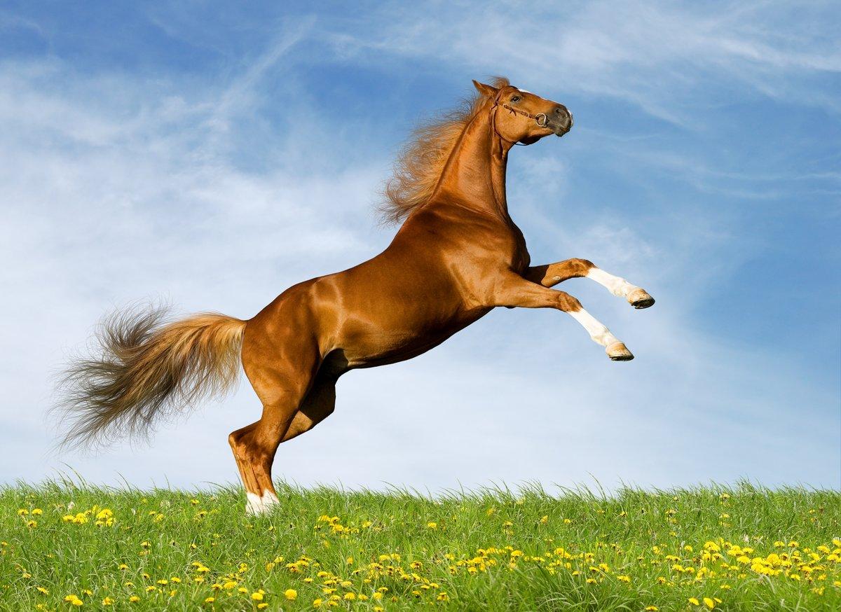 Во сне вам приснилось лошадь: стоит ли переживать за такой знак судьбы