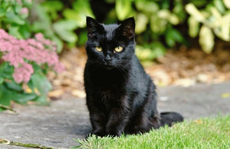 Как избежать беды, если черная кошка перебежала дорогу