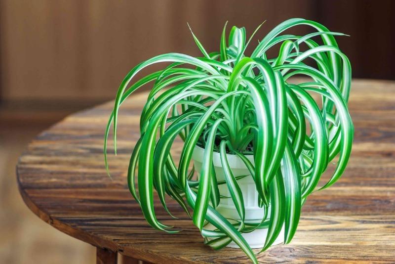 Какие домашние растения по приметам принесут счастье
