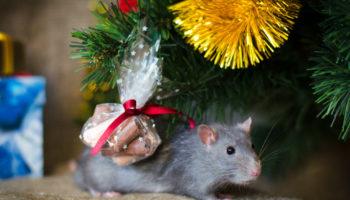 Какие праздничные ритуалы и обычаи следует соблюдать, чтобы год Крысы принес счастье