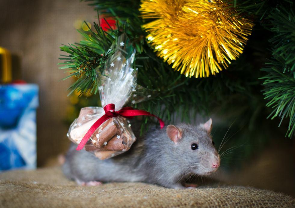 Крыса под елкой