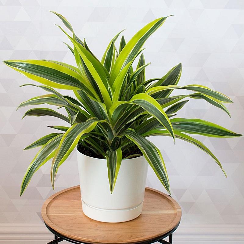 Какие растения подойдут разным знакам Зодиака